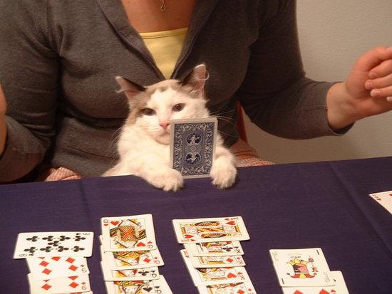 Cat casino photoshop официальный клуб вулкан promo@vulcan-casino.com